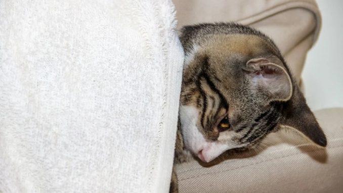 comment traiter diarrhee chat